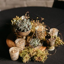 Sedum centerpiece with fairy lights