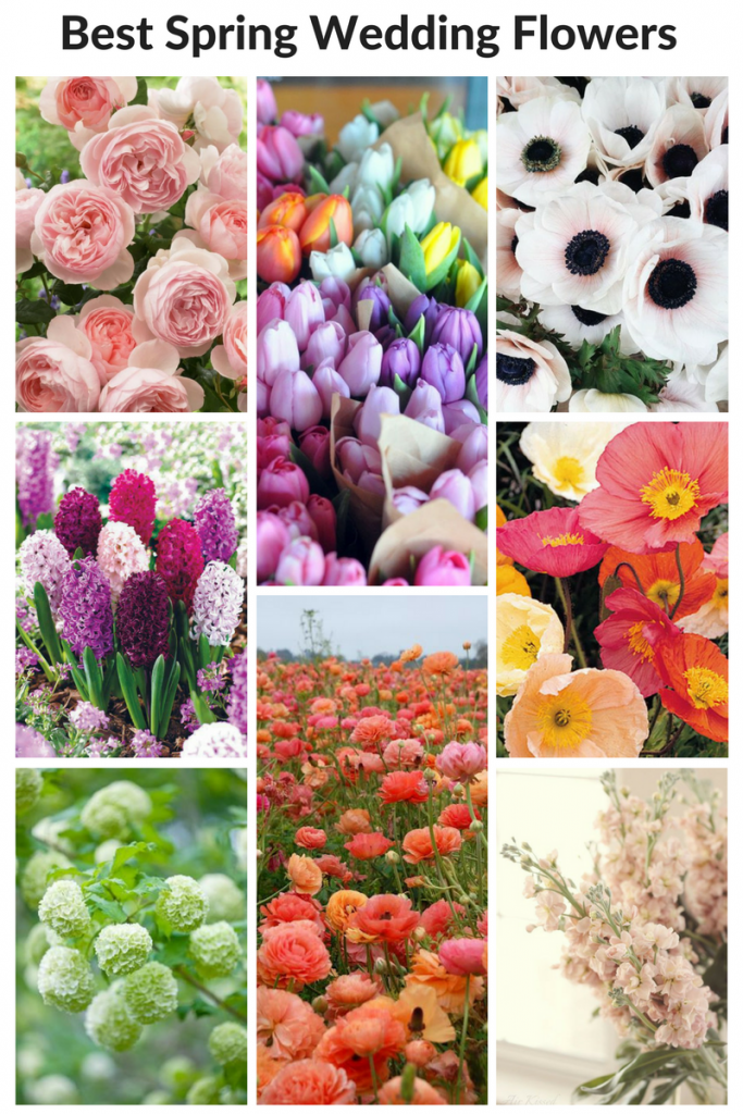 Best spring wedding flowers tobey nelson weddings events what are the best wedding flowers for spring learn more https mightylinksfo
