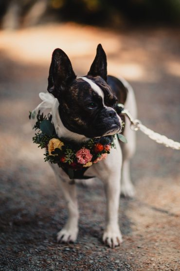 Floral dog collar for a Fireseed Catering Whidbey Island wedding | Tobey Nelson Events